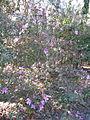 Magnolia Plantation and Gardens - Charleston, South Carolina (8556516904).jpg