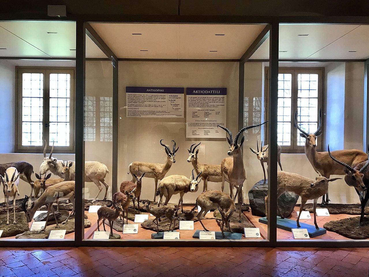 Nuova galleria dei mammiferi