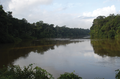 Mana River at Angoulême, French Guiana - journal.pone.0057756.g001-top.png