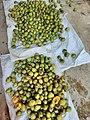 Mangoes Local Kerala Thrissur.jpeg