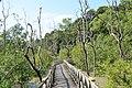 Mangrove area - Bako National Park - Sarawak - Borneo - Malaysia - panoramio.jpg