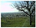 March Kaiserstuhl - Master Season Rhine Valley Photography - panoramio.jpg
