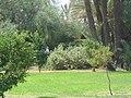 Marrakesh - 2008 - panoramio (64).jpg
