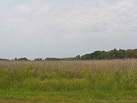 Marshland on Kent Island.jpg