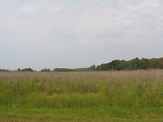 Kent Island (Maryland) - Marshland on Kent Island