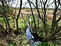 Marshy ground along the Gass Burn - geograph.org.uk - 319884.jpg