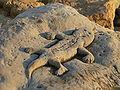 Matala-Red Beach-Relief-Lizard.jpg