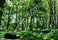 Max-Aschmann Park - panoramio (2).jpg