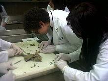 Histology - Wikipedia