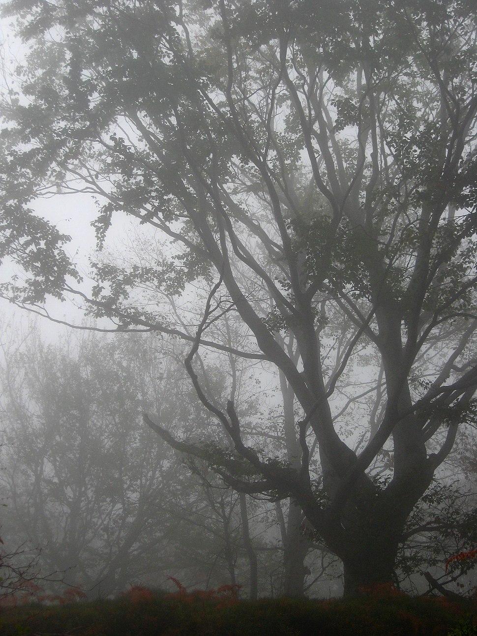 Medvednik - zapadna Srbija - Na putu ka Zelenom Viru - Novembarska magla na planini 5
