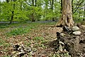 Mersey Way Bluebells - geograph.org.uk - 1530329.jpg