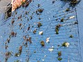Mid-City Wall with Plants.jpg