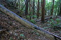 Mikawa castle yokobori.jpg