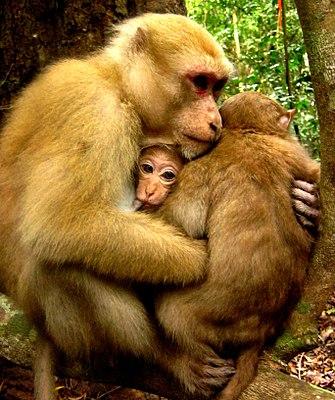 Mom's embrace.jpg