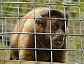 Monkey Sanctuary 4.jpg