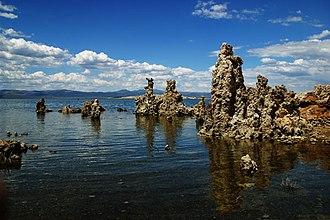 Spirochaeta americana - Mono Lake, showing tufa (calcium deposits).