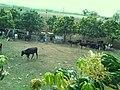 Monte Plata Province, 92000, Dominican Republic - panoramio (3).jpg