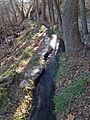 Montezuma Well canal 1.JPG