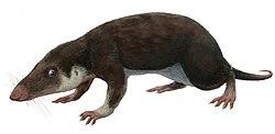 Resultado de imagen de morganucodon