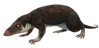 Morganucodon - Restoration of M. watsoni