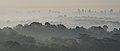 Morning Fog (209412053).jpeg
