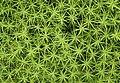 Moss - geograph.org.uk - 515684.jpg