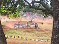 Motocross on Palawan 3 - panoramio.jpg