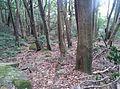 Mount Keira NSW 2500, Australia - panoramio (5).jpg