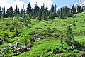Mount Rainier - Paradise - view from Dead Horse Creek Trail - August 2014 - 01.jpg