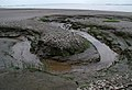 Mud and Sand - geograph.org.uk - 446801.jpg