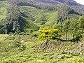 Munnar - panoramio (5).jpg