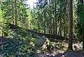 Mur de Tlesura 2 y bosch de Resciesa Urtijëi.jpg