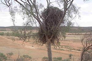 Wilyakali - Image: Mutawintji 4 Eagle Nest