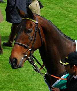 My Tent Or Yours Irish-bred Thoroughbred racehorse