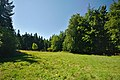 Národní přírodní rezervace Bukačka, okres Rychnov nad Kněžnou (02).jpg