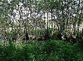 NSG Stellmoorer Tunneltal liegender Weidenbaum.jpg