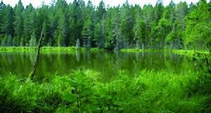 Kadrina Parish - Image: Nabudi järv Viitna järvemägedes (foto Martin Suuroja)