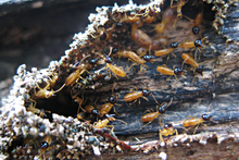termite pest control newcastle