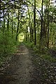 Natchez Trace Trail in Mississippi 1.jpg