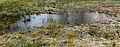 Nationaal Park Weerribben-Wieden. Bevroren poel in zompig biotoop.jpg