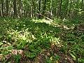 Nationalpark Hainich craulaer Kreuz 2020-06-03 9.jpg