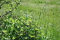 Nationalpark Müritz - bei den Federower Dickungen - Landkärtchen (5).jpg