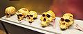 Natural History Museum of Slovenia - skulls.jpg