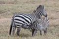 Nature of Ngorongoro Conservation Area (64).jpg
