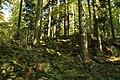 Nature reserve Ptaci stena in autumn 2011 (17).JPG