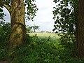 Naturschutzgebiet Hetter-Millinger Bruch PM18-08.jpg