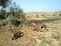 Navidhand new 452 - panoramio.jpg