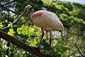 Neopark Okinawa, Japan (6060827980).jpg