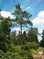 Neuer Botanischer Garten - Heidegarten 001.jpg