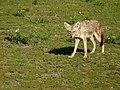 Ngorongoro (15) (13962147280).jpg